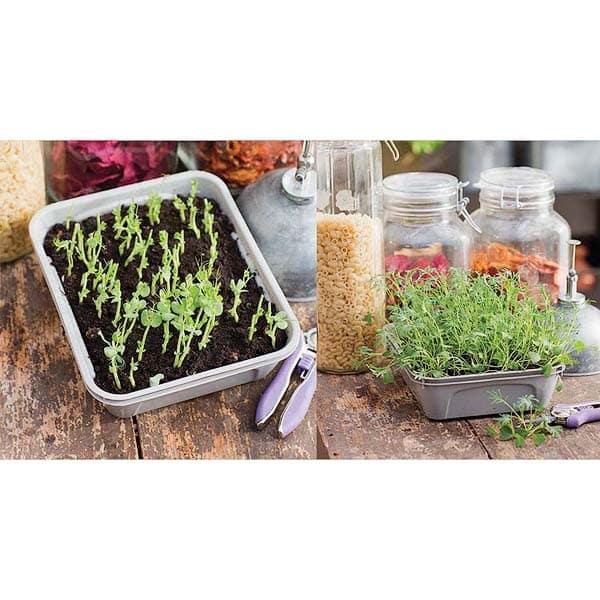 Nelson Garden Micro Leaf 1-box for Microgreens | Bladgrönt / Groddar, 5792 (7312600157927)