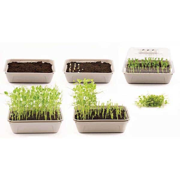 Nelson Garden MicroLeaf 3-box for Microgreens | Bladgrönt / Groddar, 5794 (7312600157941)